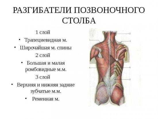 a vállízület fáj a karok felemelésekor)