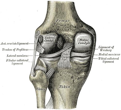 térd kenőcső rheumatoid arthritis)