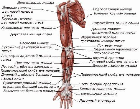 Térdizületi porc-kopás (Gonarthrosis)   Dr. Gergely Zsolt