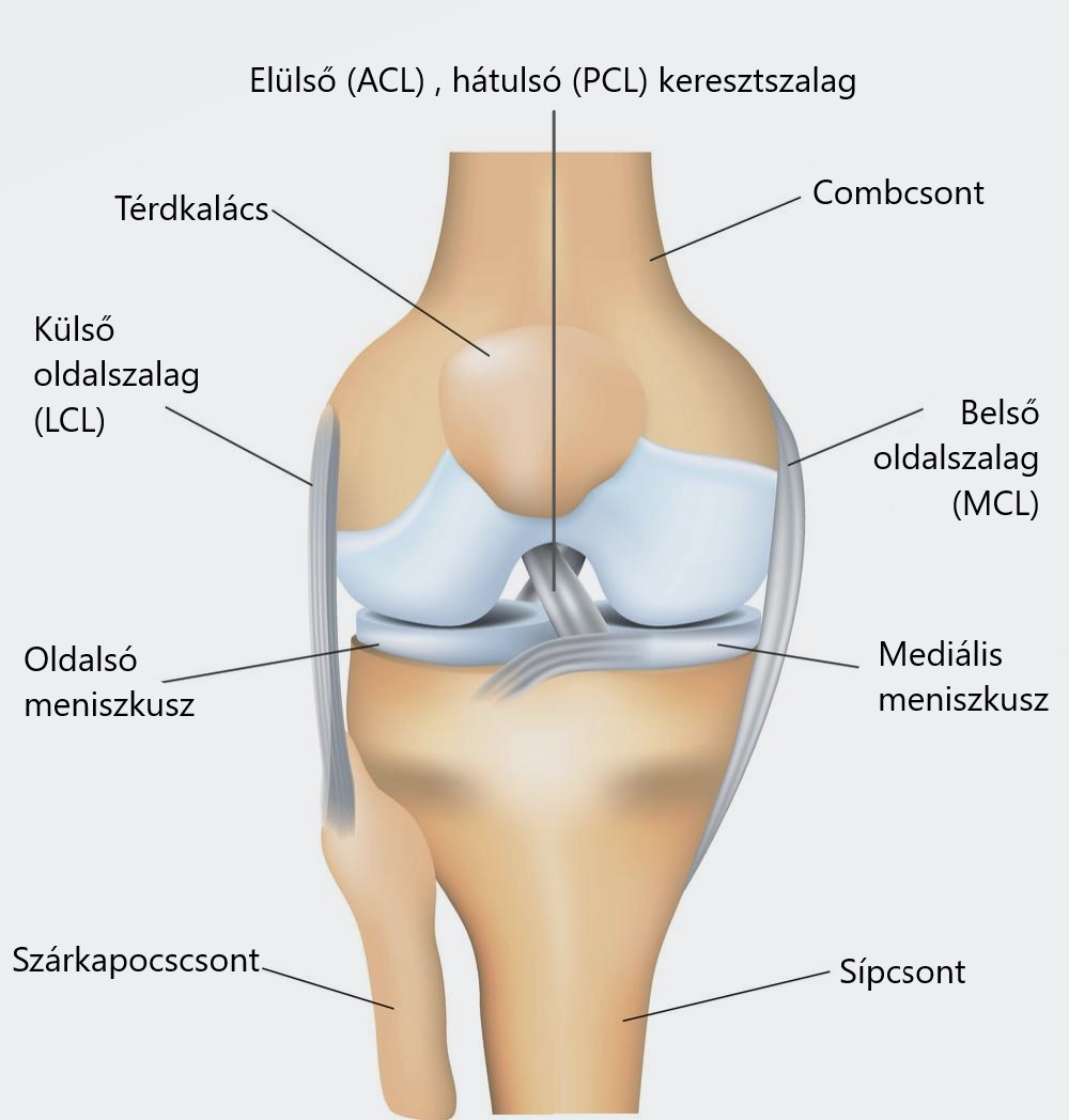a combcsont és a térd fájdalma