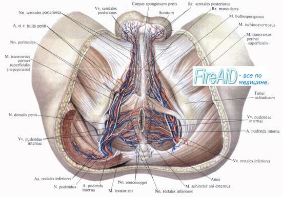 fájdalom a csípőízületekben és a perineumban