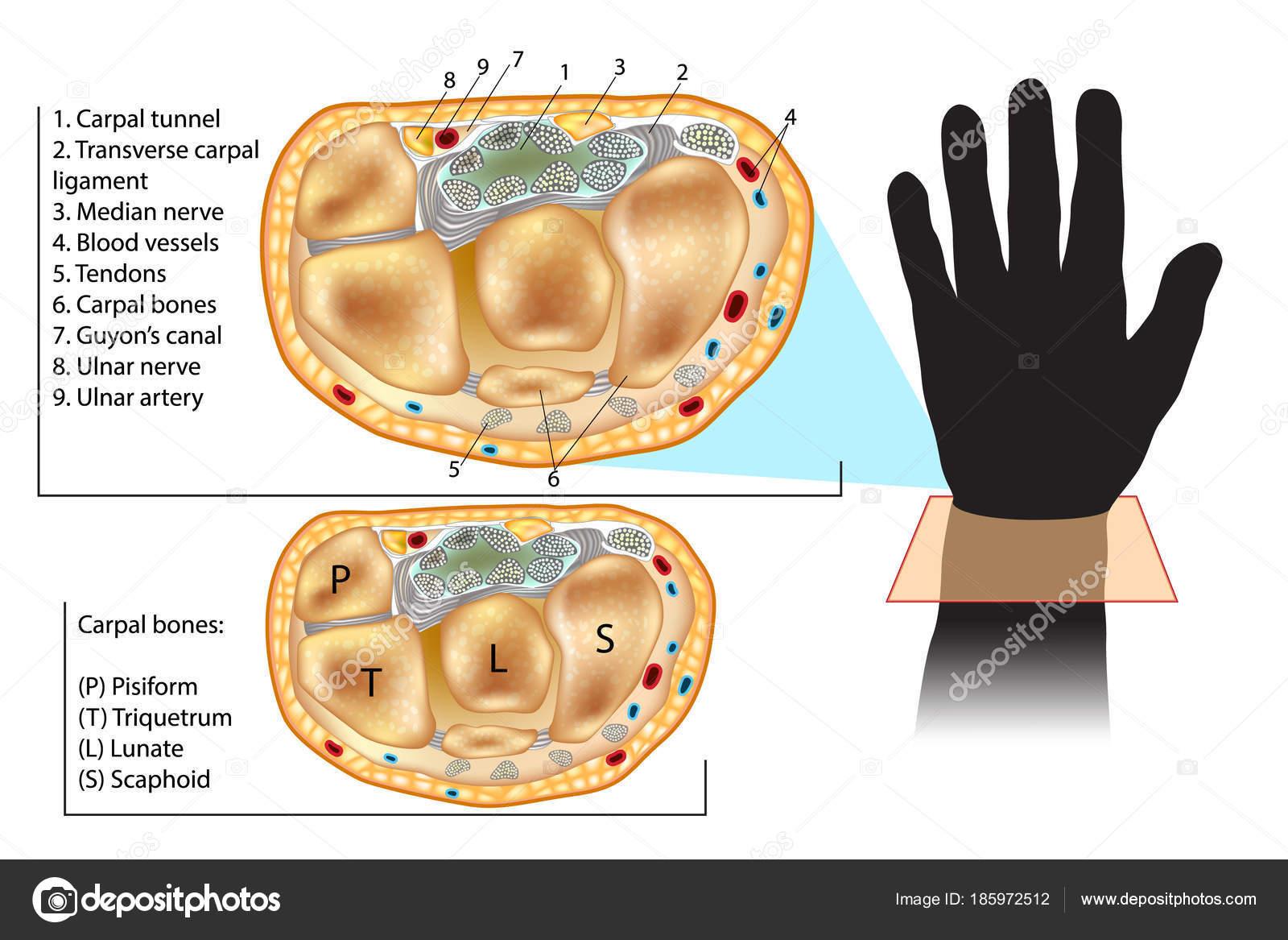 Reuma Lézerterápia / Mozgásszervi vizsgálat