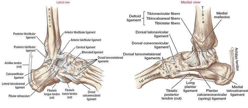 a térdízület peritoneális fibularis ligamentuma károsodása