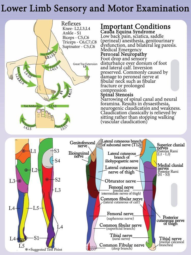 a sacrum ízületének gyulladása