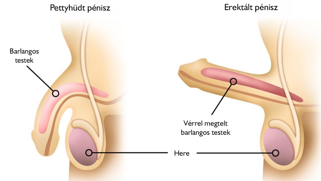 ízületi fájdalom urológia)