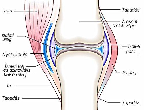 fáj a térd alatti ízületben duzzanat a lábízületben