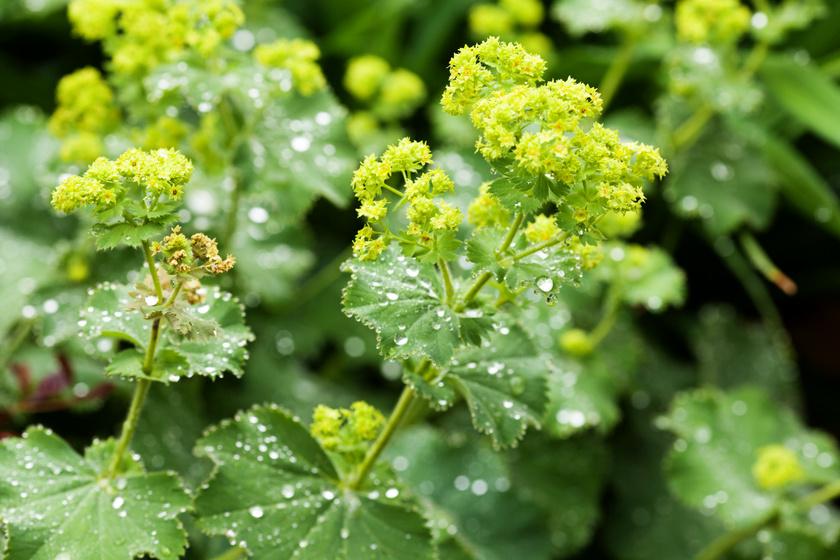 gyógynövények közös kezelésre a karok hajlítása fáj a könyök ízületeit