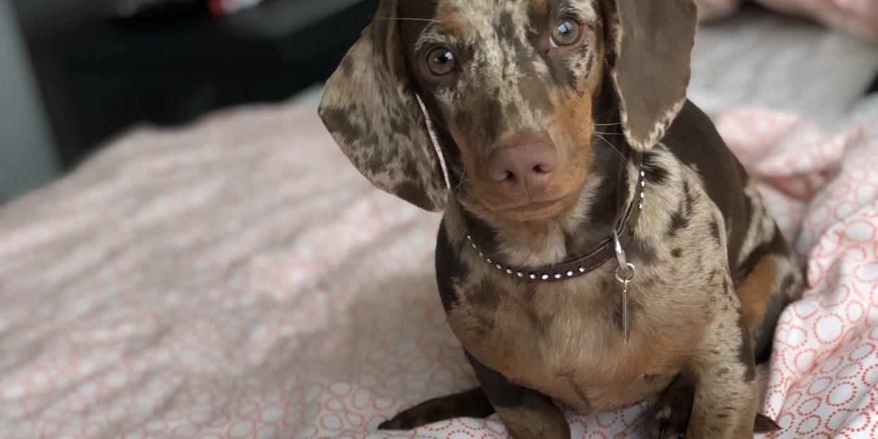 Ízületi gyulladás kezelése kutyáknál
