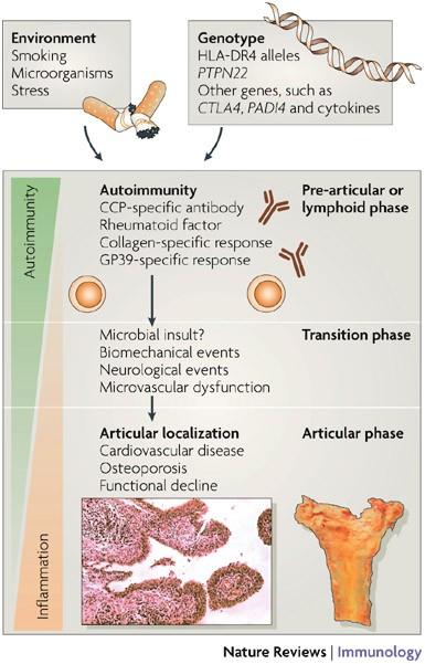 rheumatoid arthritis pathogenesis nature