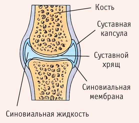 A kezek és a kezek csontok felépítése és funkciói