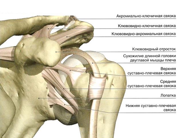 a vállízületek artrózisa sugárzott
