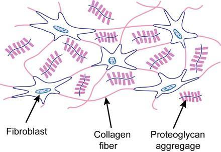 laza kötőszöveti regeneráció típusa)