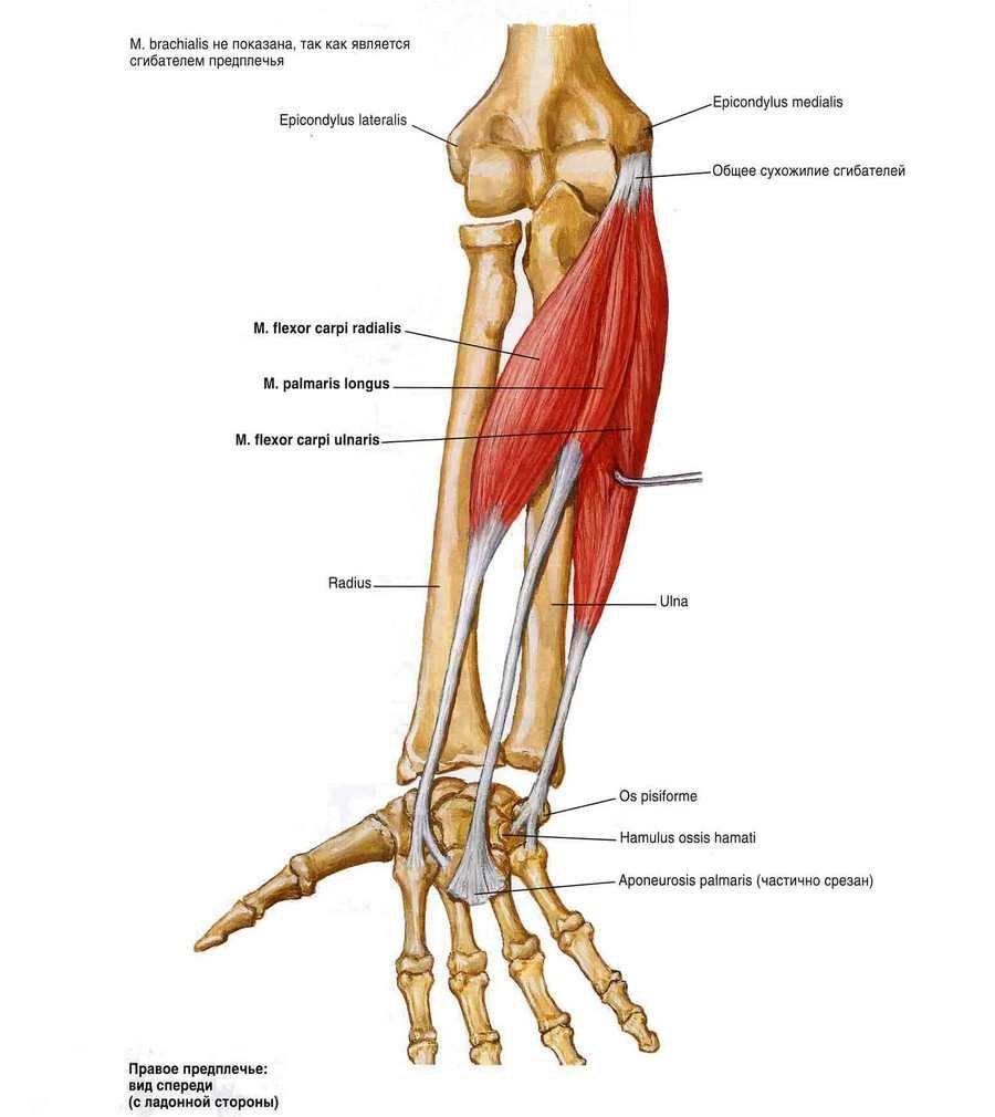 A vállízület arthrosisának deformálása