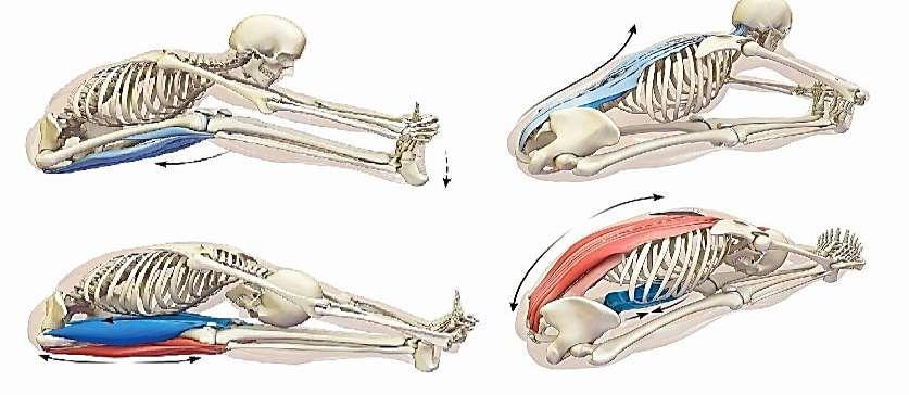 fájdalom és duzzanat a vállízület vegetatív érrendszeri ízületi fájdalom