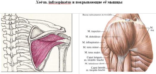pontfájdalom a könyökízületben tirozol és ízületi fájdalmak