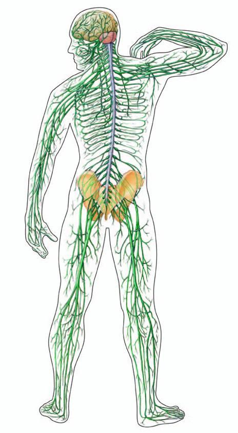Műtéti érzéstelenítés: helyi érzéstelenítés, altatás, kombinált érzéstelenítés