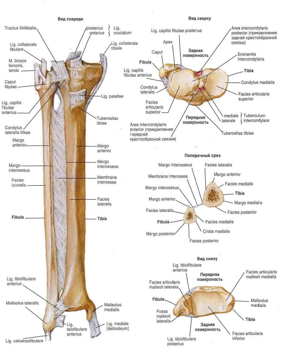Hosszú elfeledett és kevéssé ismert gyakorlatok: rotator mandzsetta