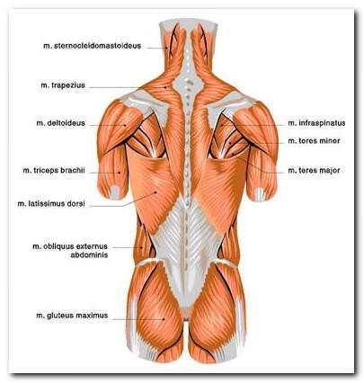 a gerinc ízületei megfeszülnek és fájnak