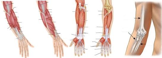 szúró fájdalom a jobb vállban fájó fájdalom a lábak és a karok ízületeiben
