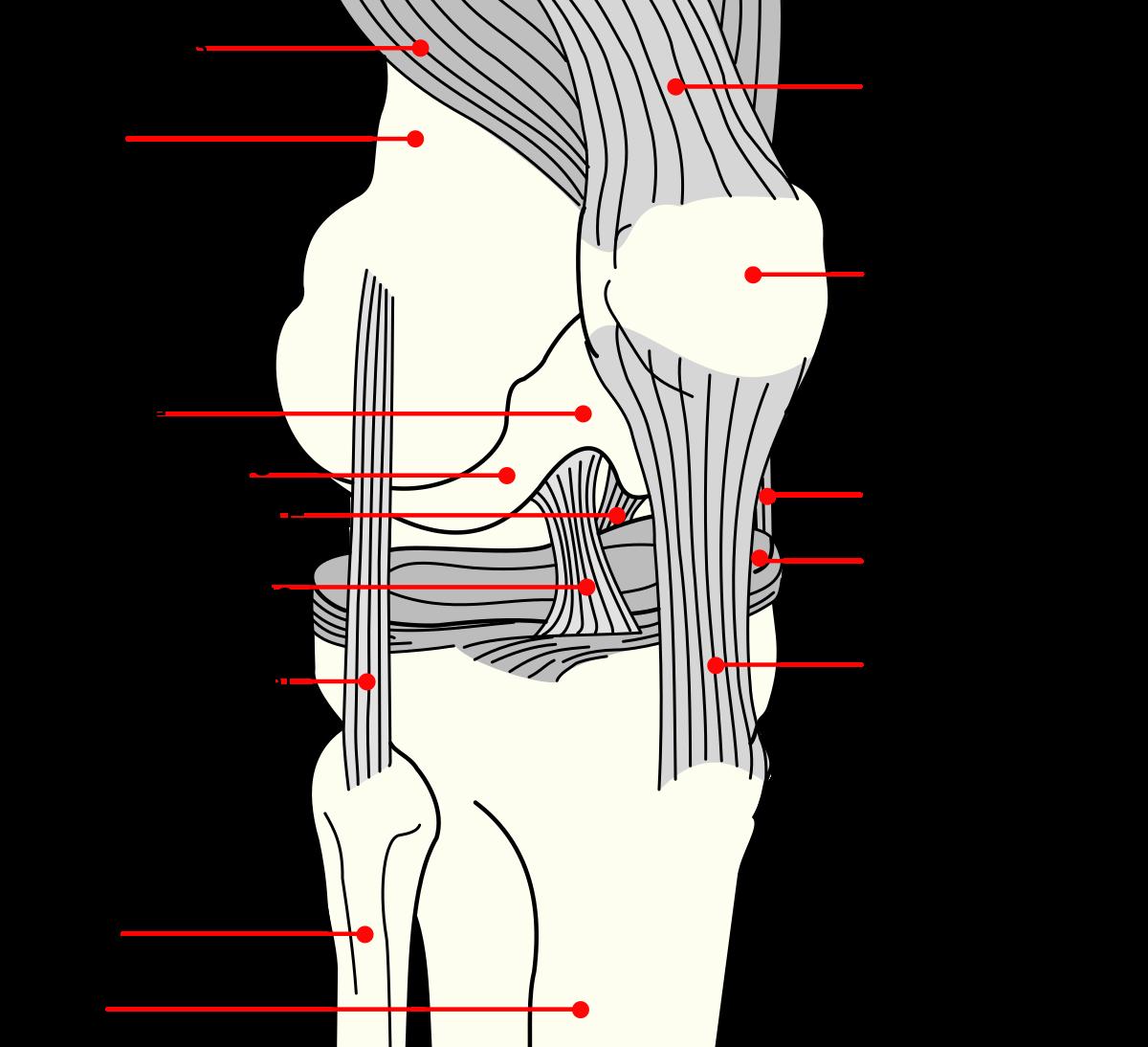 A lábak betegségei