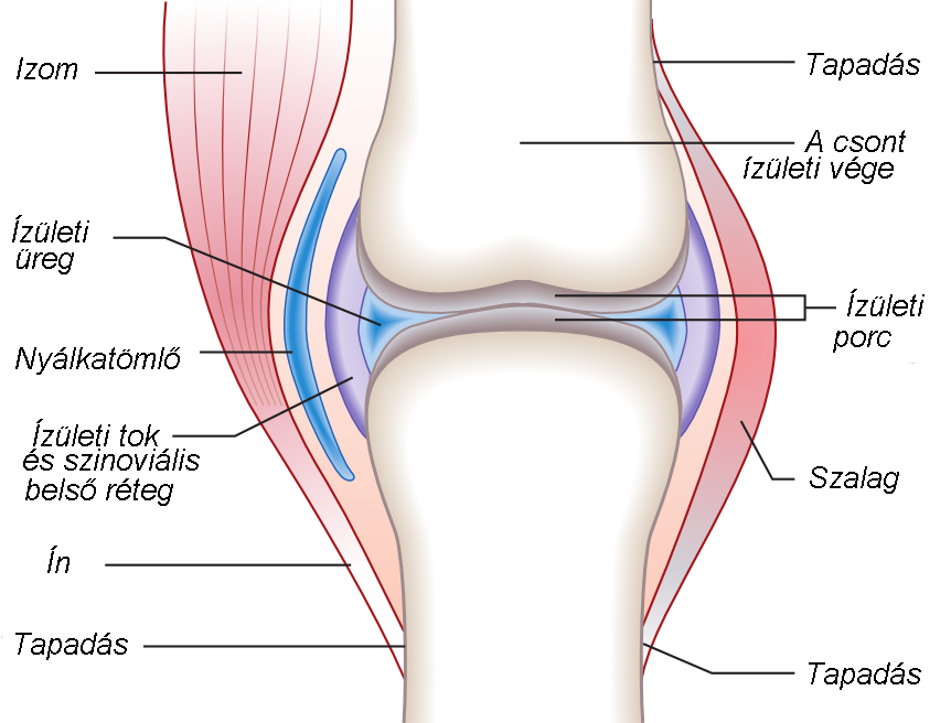 a térd kötőszövetének betegségei szempír, ízületi fájdalom