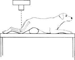 A térdízület osteosclerosisának okai és kezelése. Mi a gerinc osteosclerosis?