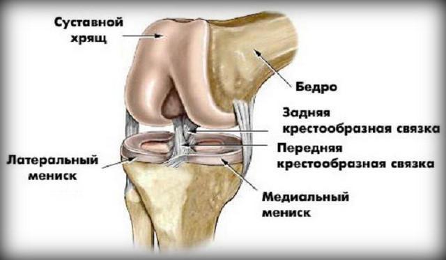 hogyan állíthatjuk le a térd artrózisának kialakulását)