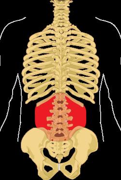 a nyaki csigolya kenőcsének csontritkulása