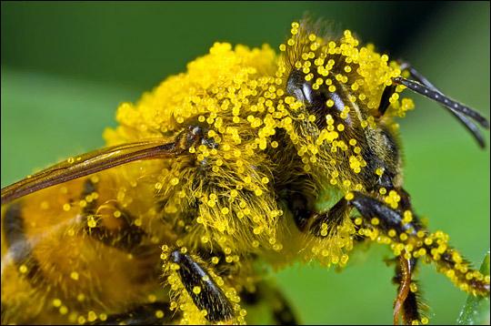 Csípések és szúrások: méh-, és darázsszúrás