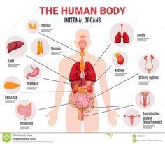 anatómiai ízületi előkészítés