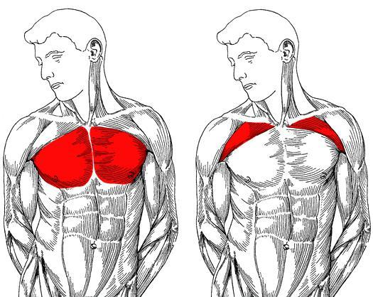 a vállízület fáj a karok felemelésekor