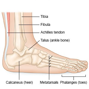 boka láb sérülése ízületi brachialis artrosis