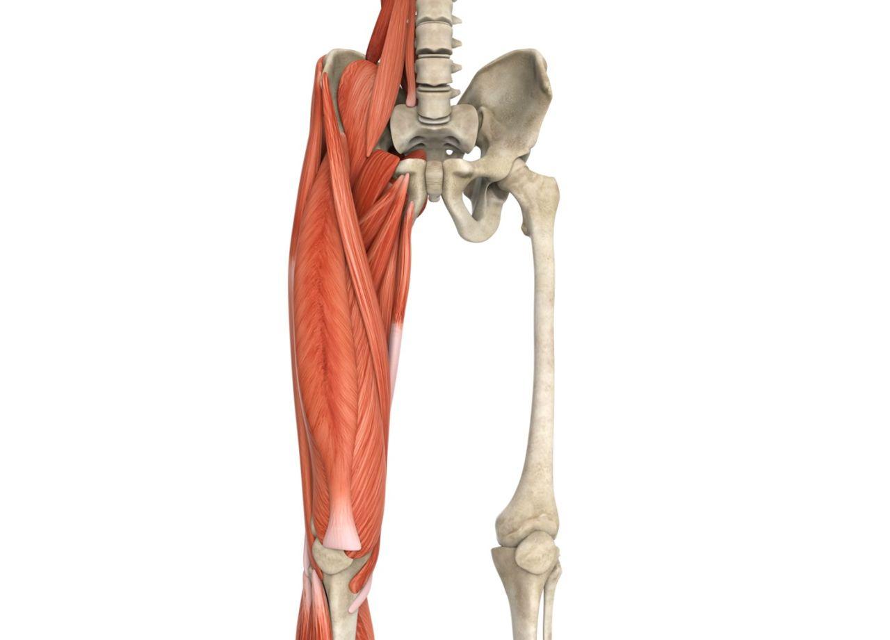 boka osteoarthritis kezelésére)