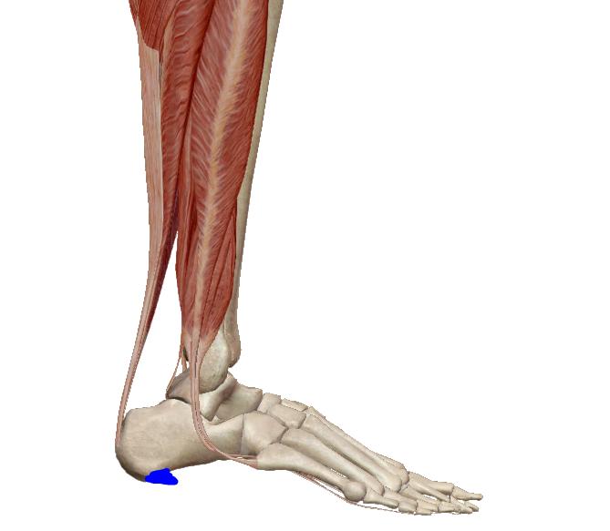 Meddig fáj a csonttörés? | Harmónia Centrum Blog
