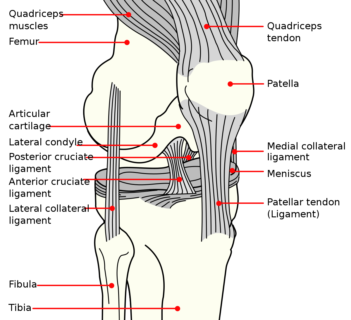 a csípőízület patella fájdalma a lábak ízületei miért fájnak