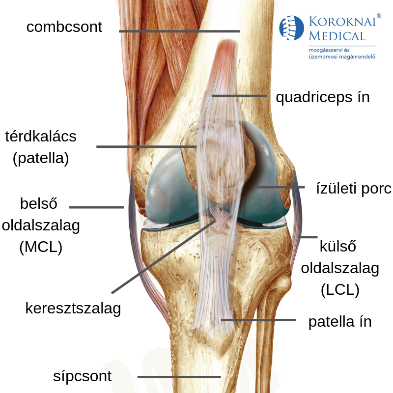térdízületi fájdalom futás után