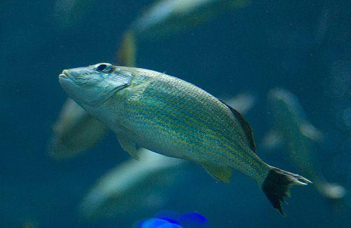 közös kezelés halak)