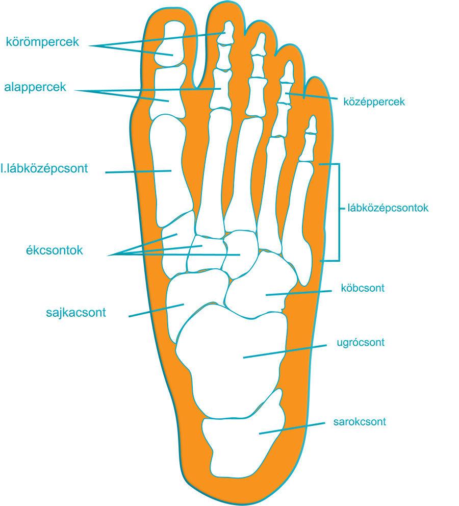 csont- és lábbetegség)