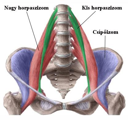 a vállízület fáj a kenőcs felvételekor a csípőízület megcsípett ideget fáj