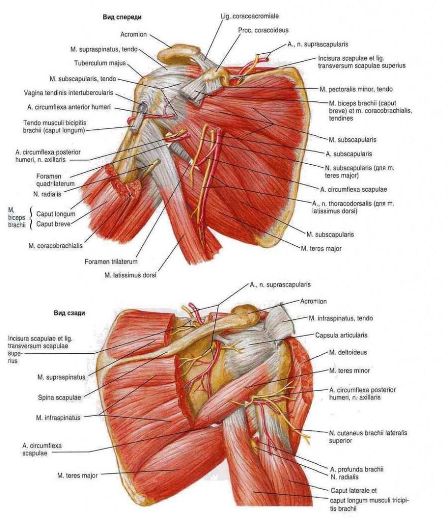 fájhatnak a térdízületek a gerinctől