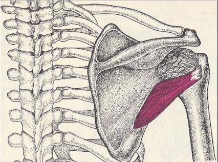 a vállízület artrózisának blokádja)