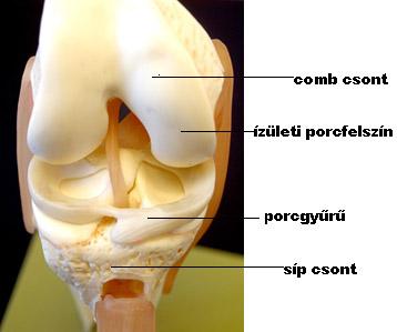 térdízület műtéti kezelés)
