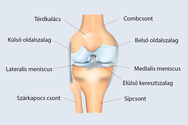 fájdalom a bal térd bal oldalán)