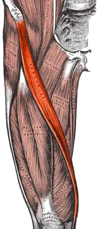 hajlító fájdalom a lábízületben