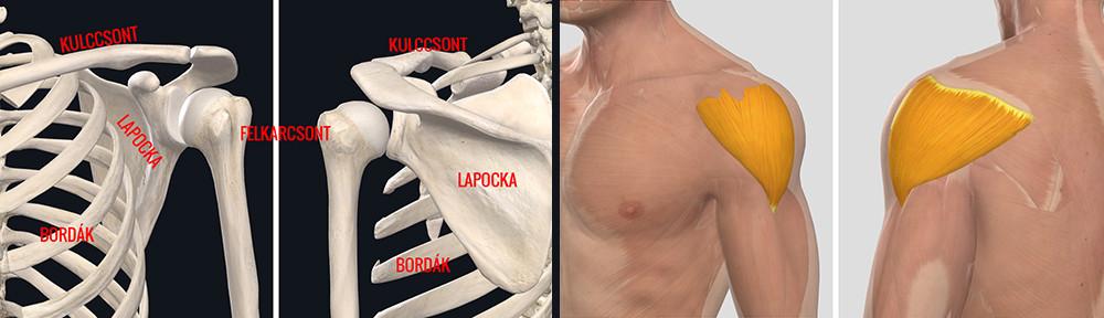 humeroscapularis artrózis kezelés