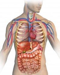 étel az ízületi fájdalom miatt ízület a csípőn