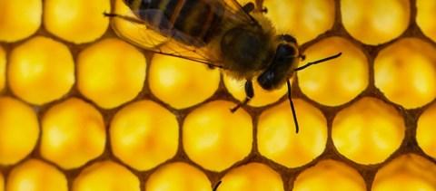 Uniós méhészeti jelentés