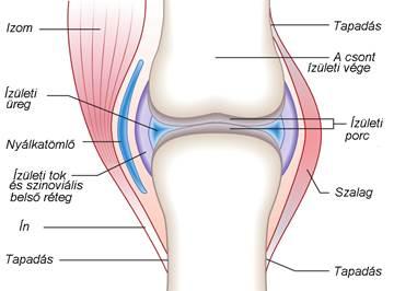 mi a különbség az artrózis és az ízületi gyulladás között)